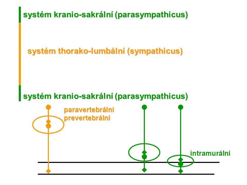 systém kranio-sakrální (parasympathicus)