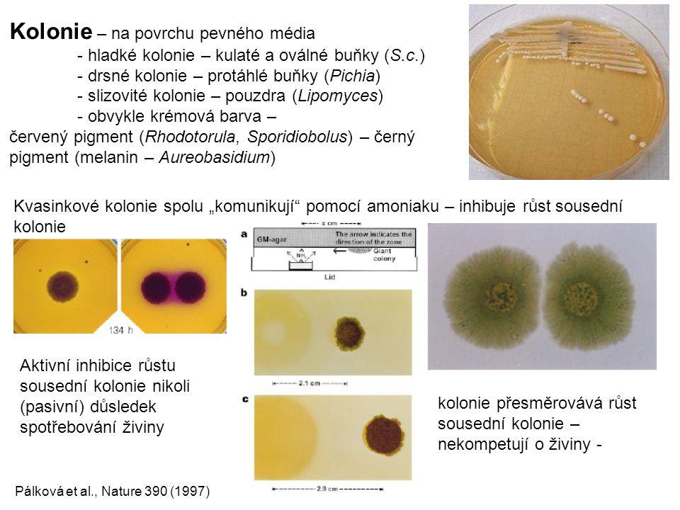 Kolonie – na povrchu pevného média