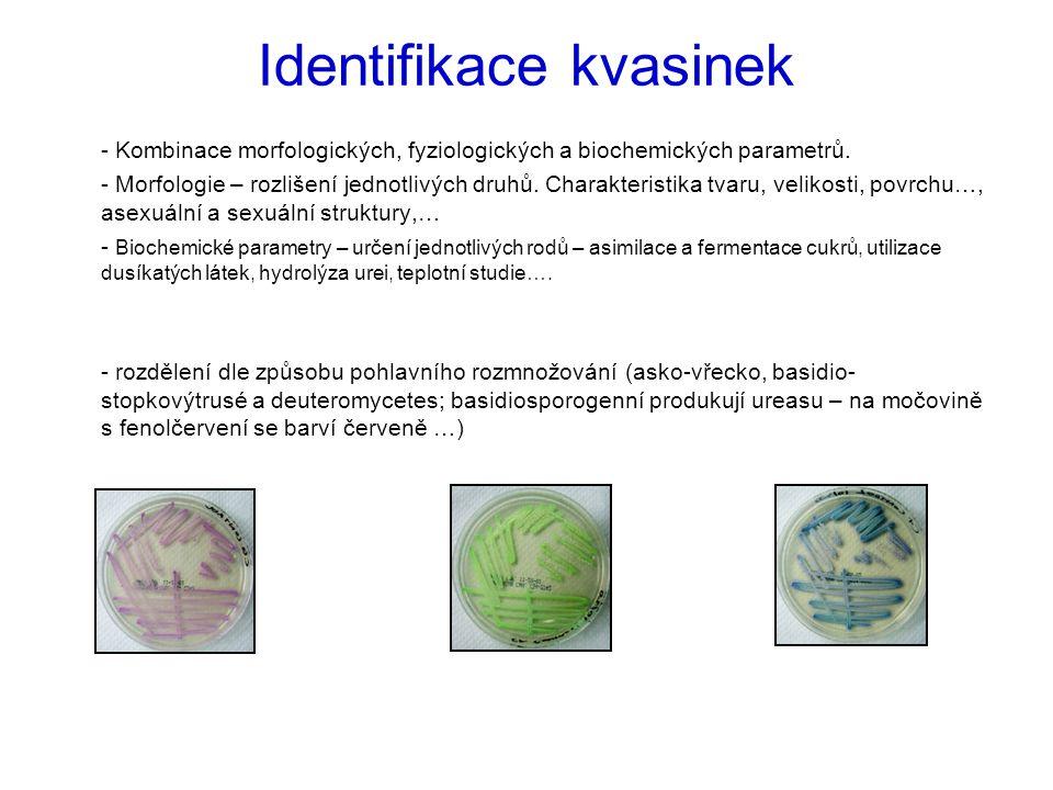 Identifikace kvasinek