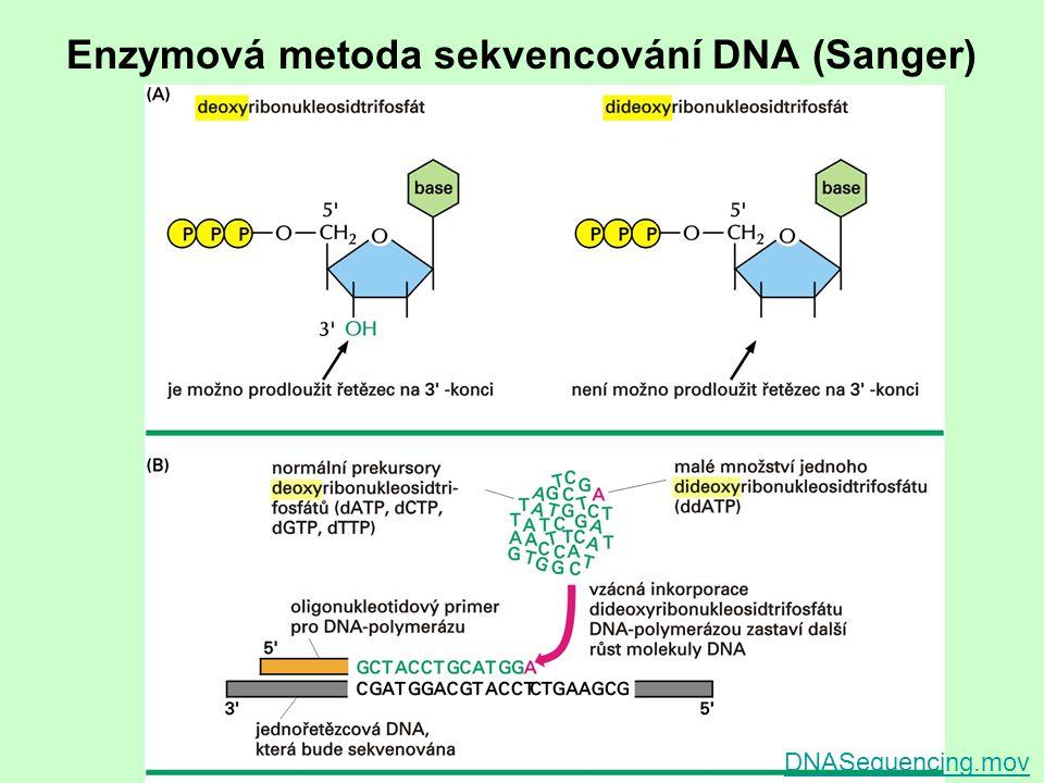 Enzymová metoda sekvencování DNA (Sanger)