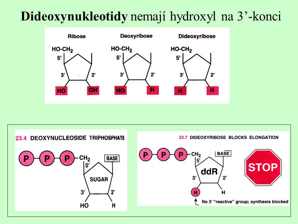 Dideoxynukleotidy nemají hydroxyl na 3'-konci