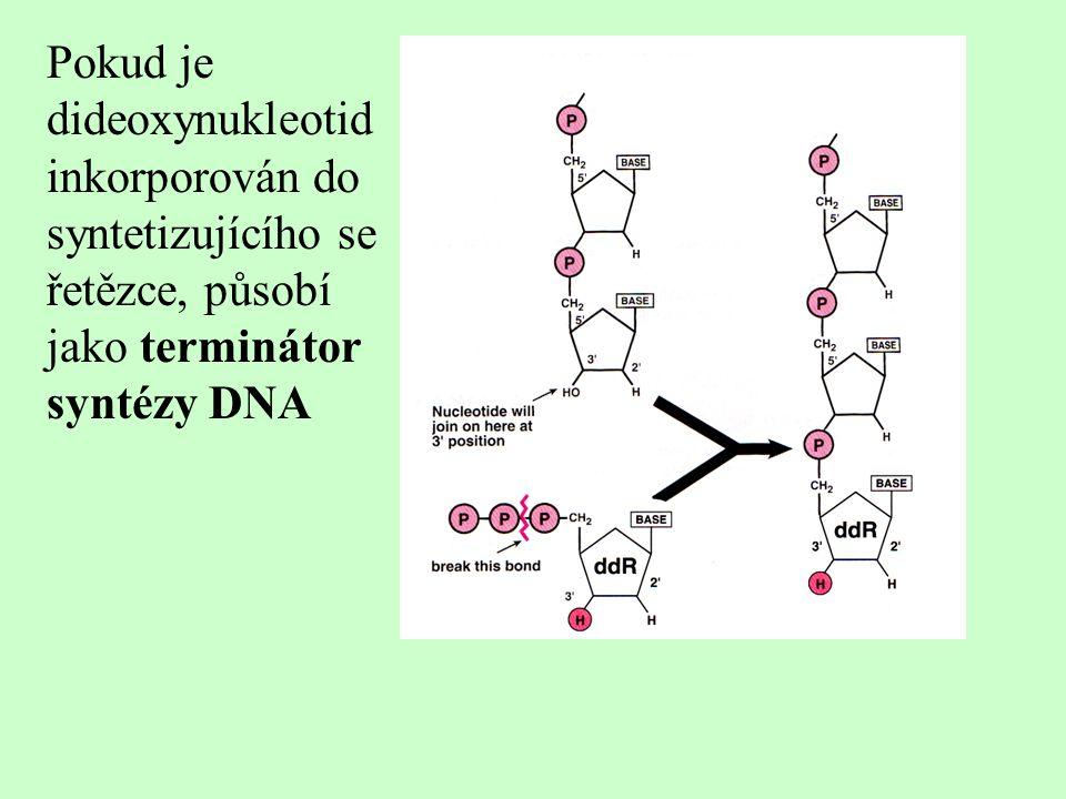 Pokud je dideoxynukleotid inkorporován do syntetizujícího se řetězce, působí jako terminátor syntézy DNA