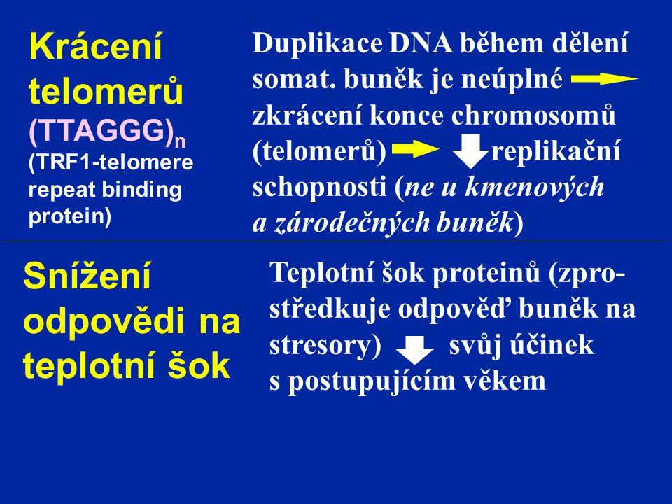 Krácení telomerů Snížení odpovědi na teplotní šok