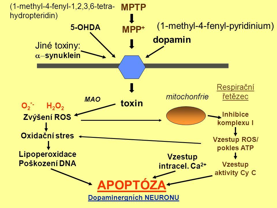 Vzestup ROS/ pokles ATP Dopaminergních NEURONU