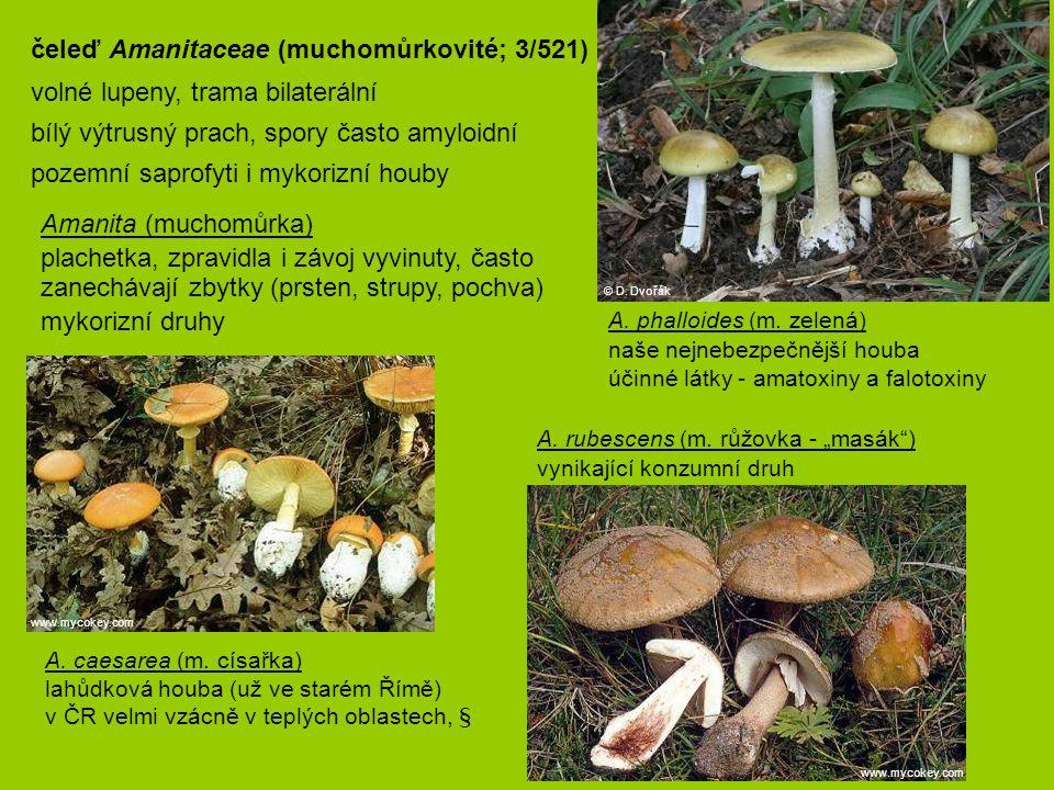 čeleď Amanitaceae (muchomůrkovité; 3/521)