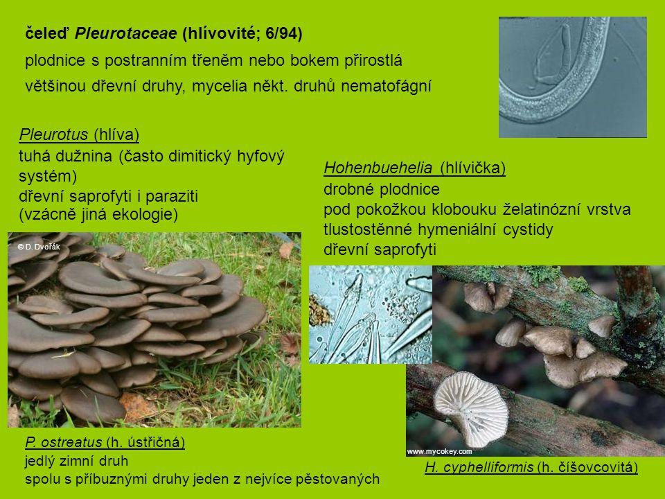 čeleď Pleurotaceae (hlívovité; 6/94)