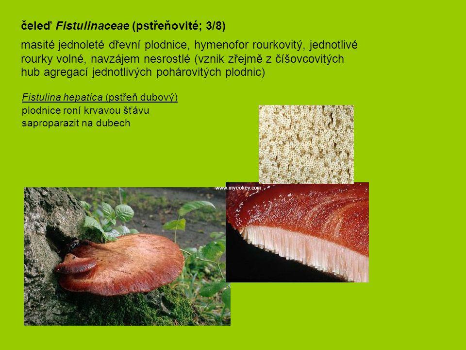 čeleď Fistulinaceae (pstřeňovité; 3/8)