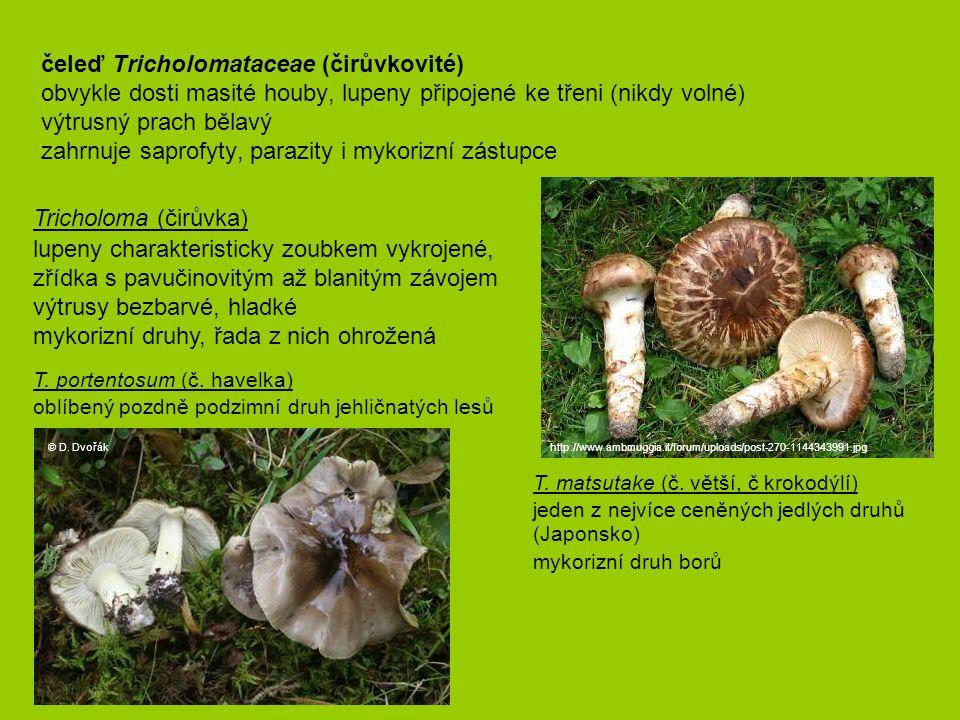 Tricholoma (čirůvka)