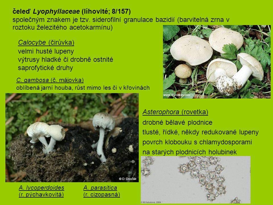 výtrusy hladké či drobně ostnité saprofytické druhy