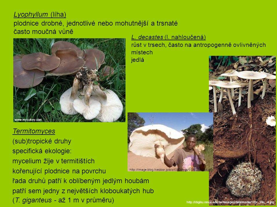 plodnice drobné, jednotlivé nebo mohutnější a trsnaté