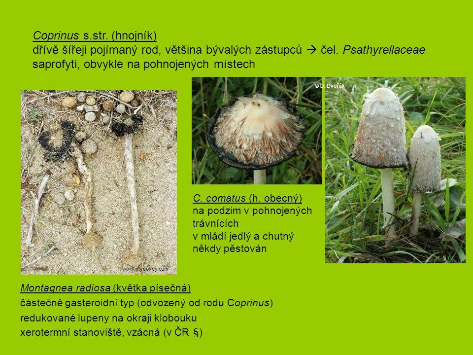 Coprinus s.str. (hnojník)