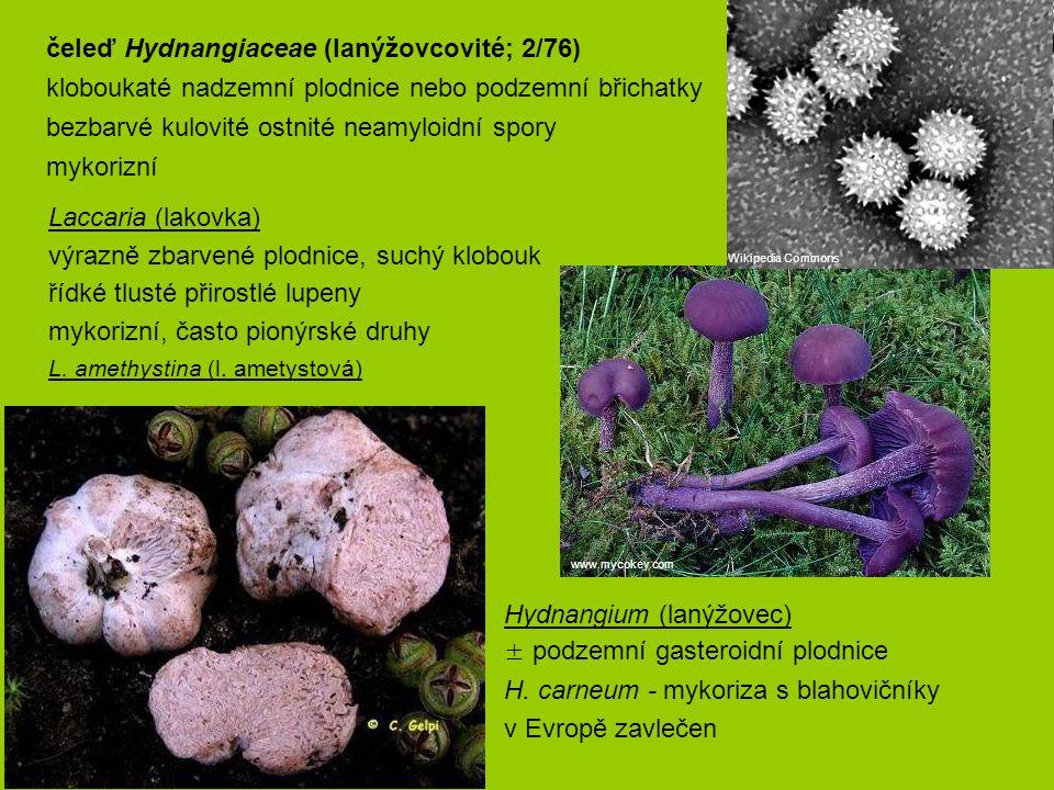 čeleď Hydnangiaceae (lanýžovcovité; 2/76)