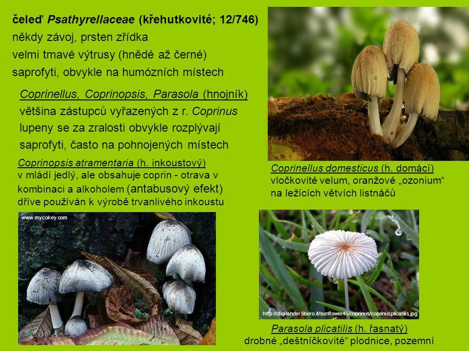 čeleď Psathyrellaceae (křehutkovité; 12/746)