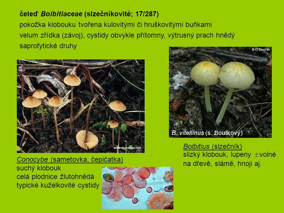 čeleď Bolbitiaceae (slzečníkovité; 17/287)