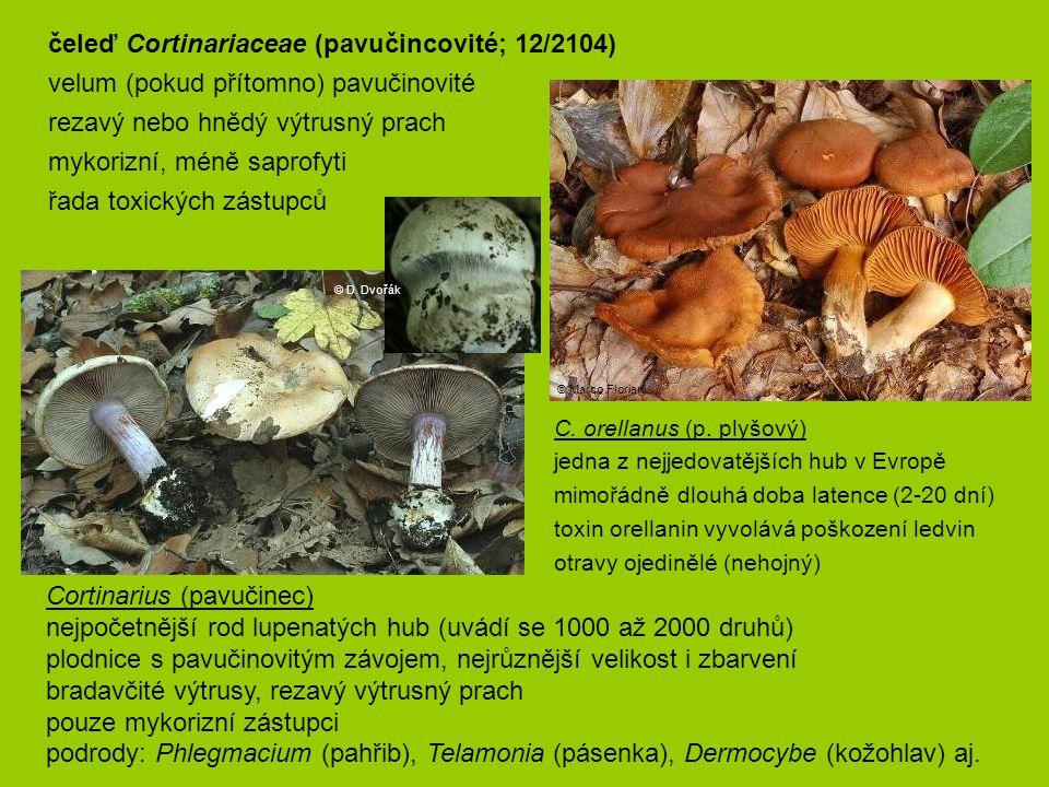 čeleď Cortinariaceae (pavučincovité; 12/2104)