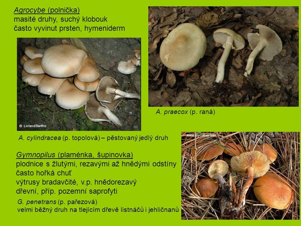 masité druhy, suchý klobouk často vyvinut prsten, hymeniderm
