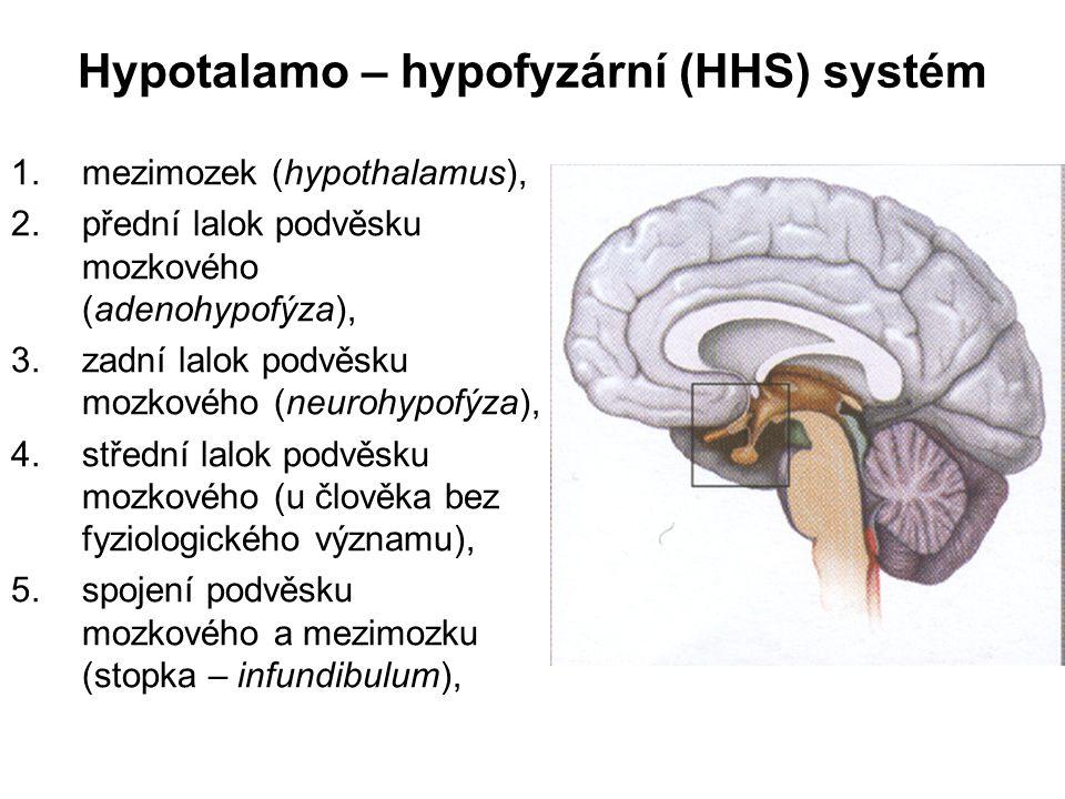 Hypotalamo – hypofyzární (HHS) systém