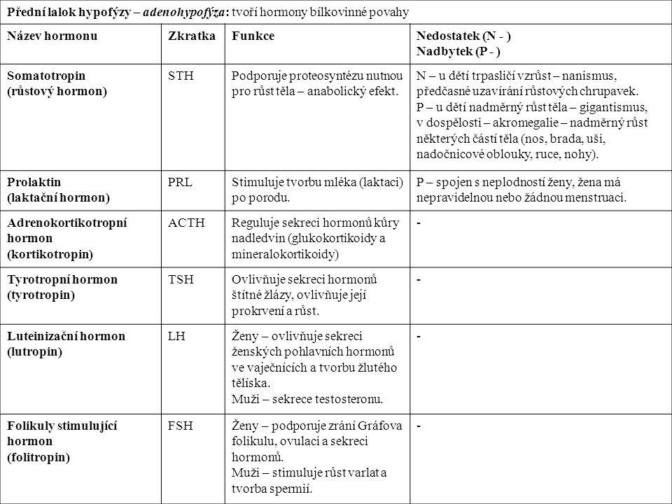 Přední lalok hypofýzy – adenohypofýza: tvoří hormony bílkovinné povahy