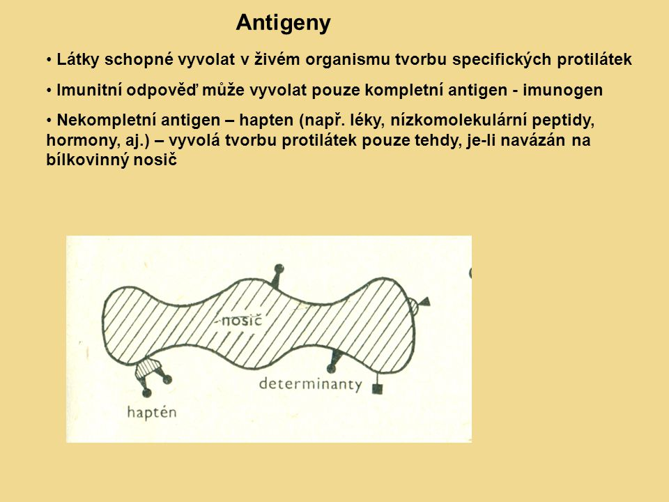 Antigeny Látky schopné vyvolat v živém organismu tvorbu specifických protilátek. Imunitní odpověď může vyvolat pouze kompletní antigen - imunogen.