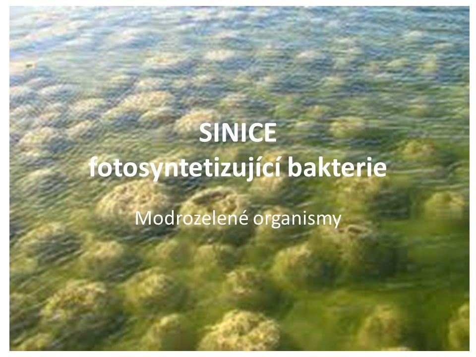 SINICE fotosyntetizující bakterie