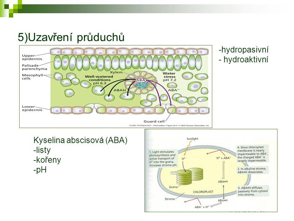 5)Uzavření průduchů -hydropasivní - hydroaktivní