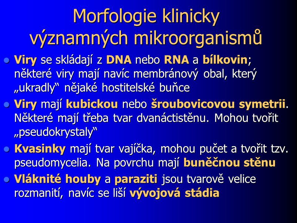 Morfologie klinicky významných mikroorganismů