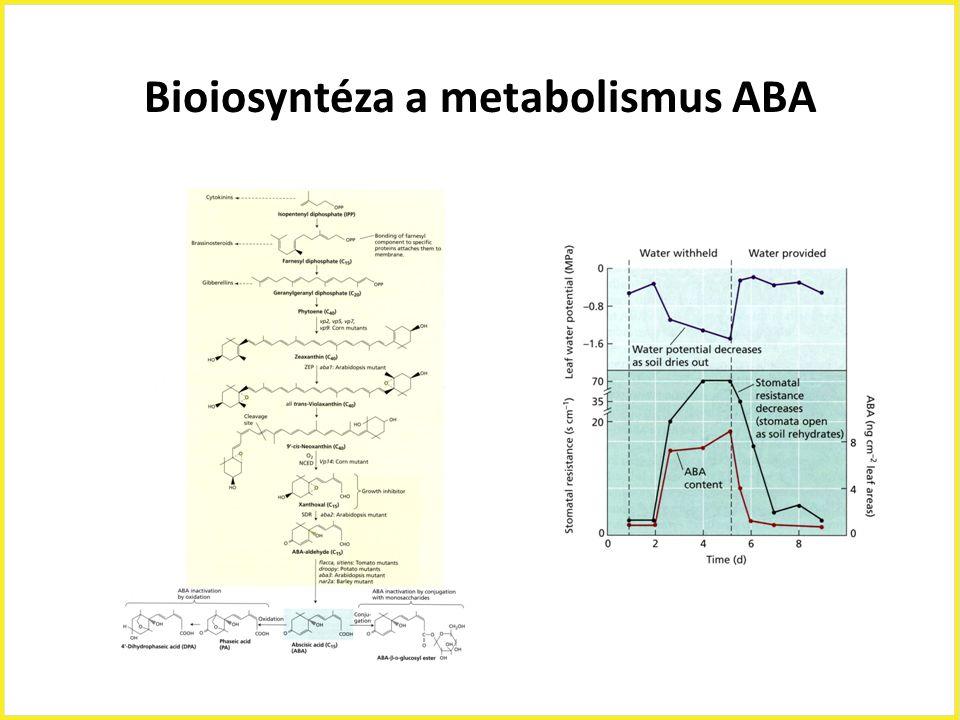 Bioiosyntéza a metabolismus ABA
