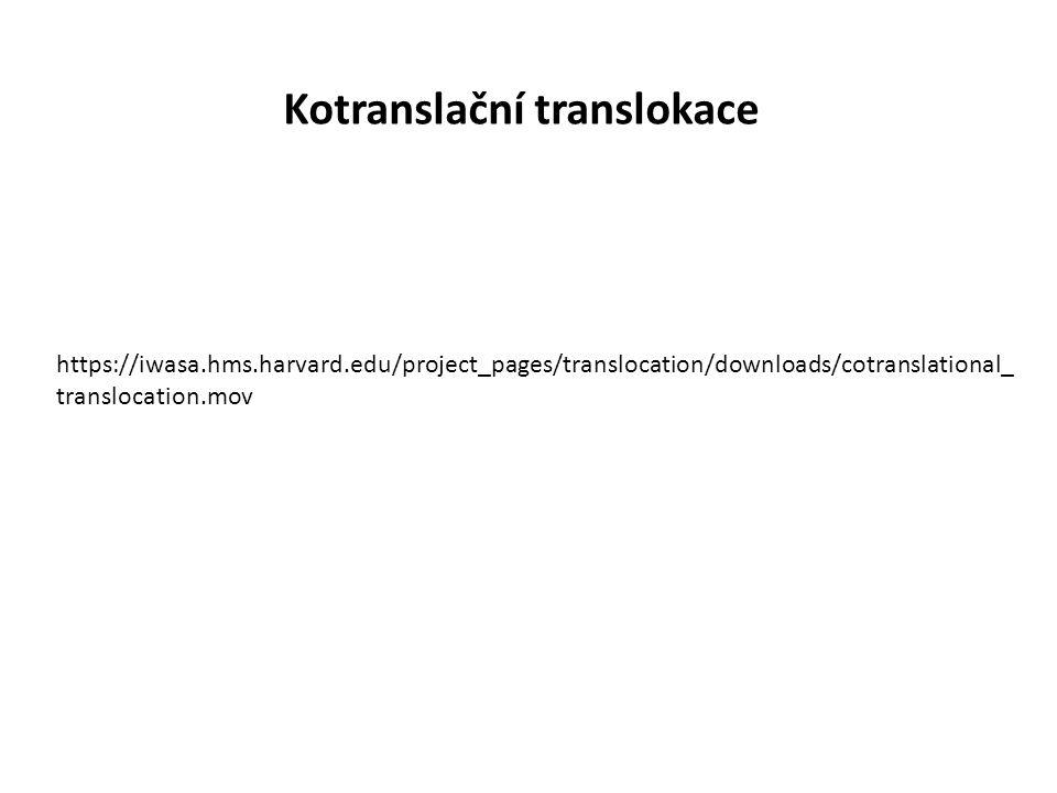 Kotranslační translokace