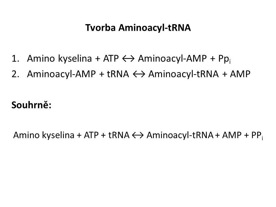 Tvorba Aminoacyl-tRNA
