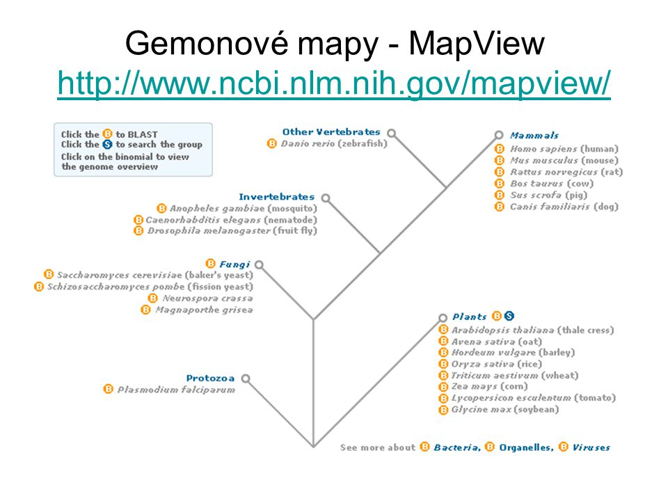 Gemonové mapy - MapView http://www.ncbi.nlm.nih.gov/mapview/