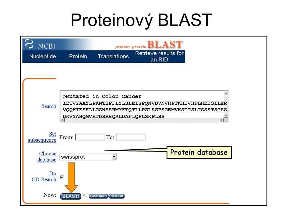Proteinový BLAST Protein database >Mutated in Colon Cancer
