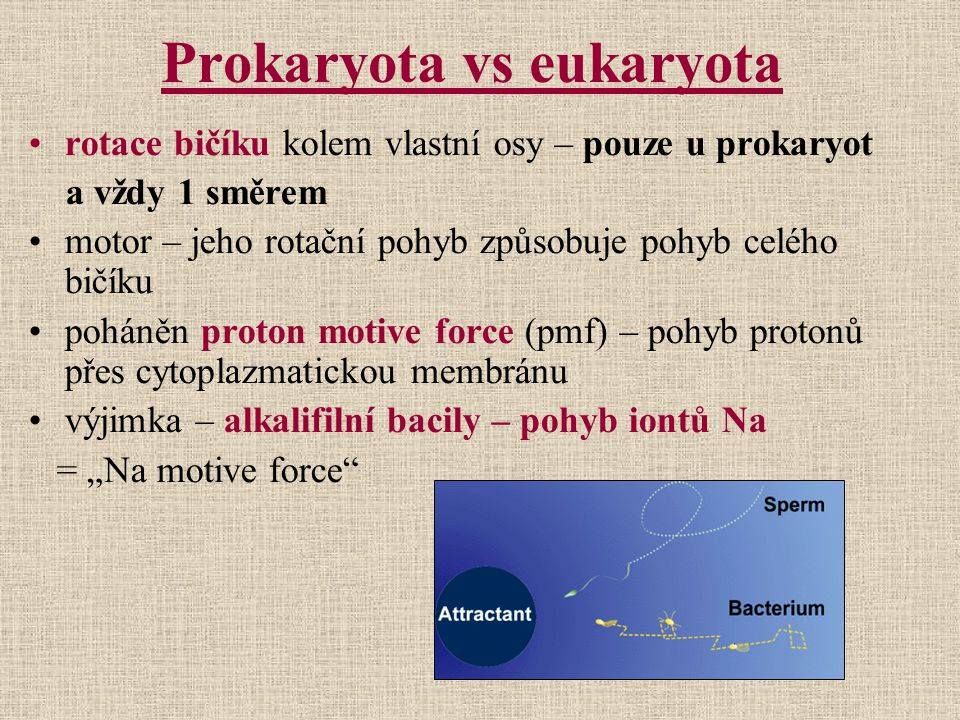 Prokaryota vs eukaryota
