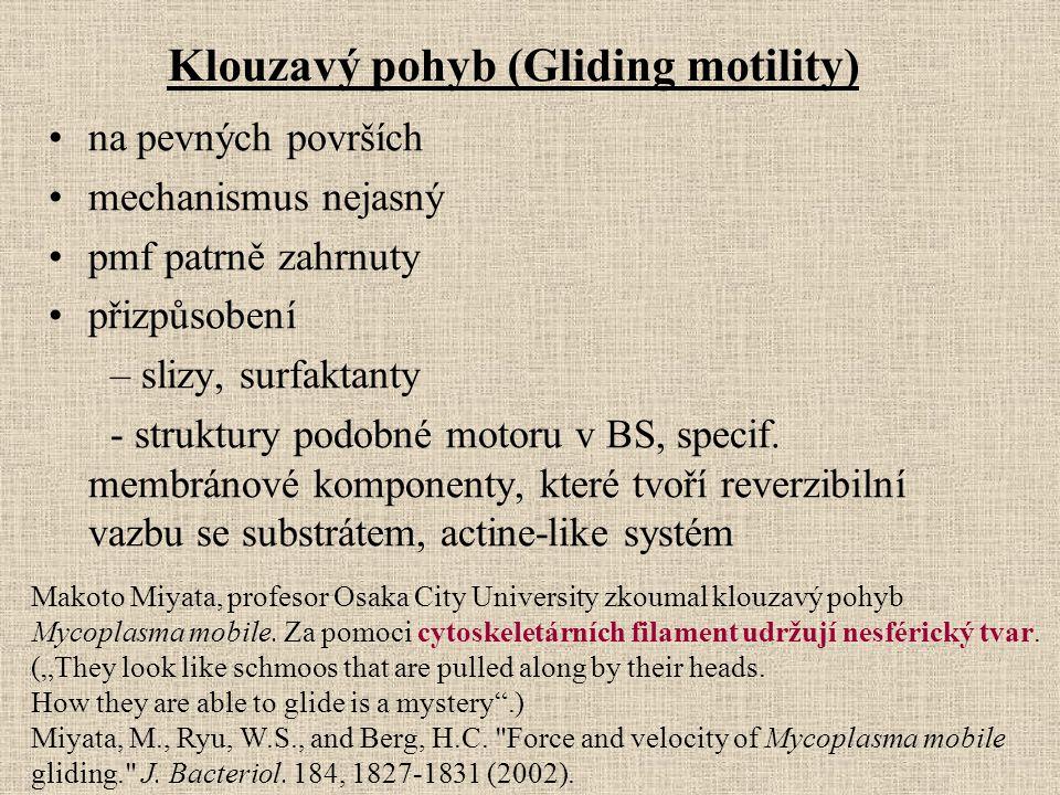 Klouzavý pohyb (Gliding motility)