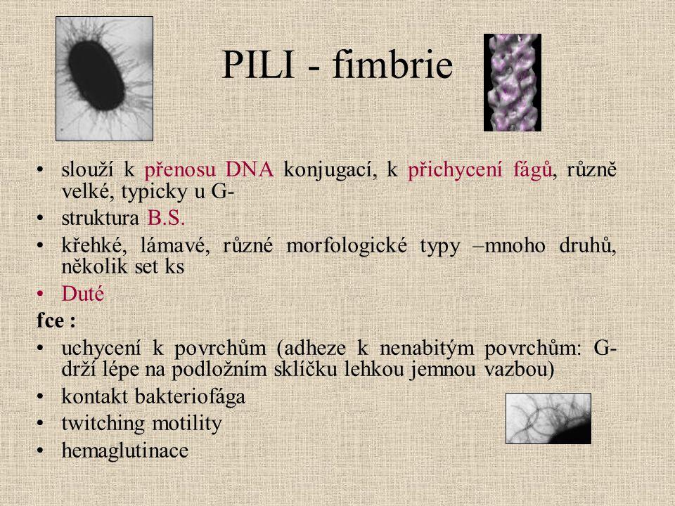 PILI - fimbrie slouží k přenosu DNA konjugací, k přichycení fágů, různě velké, typicky u G- struktura B.S.