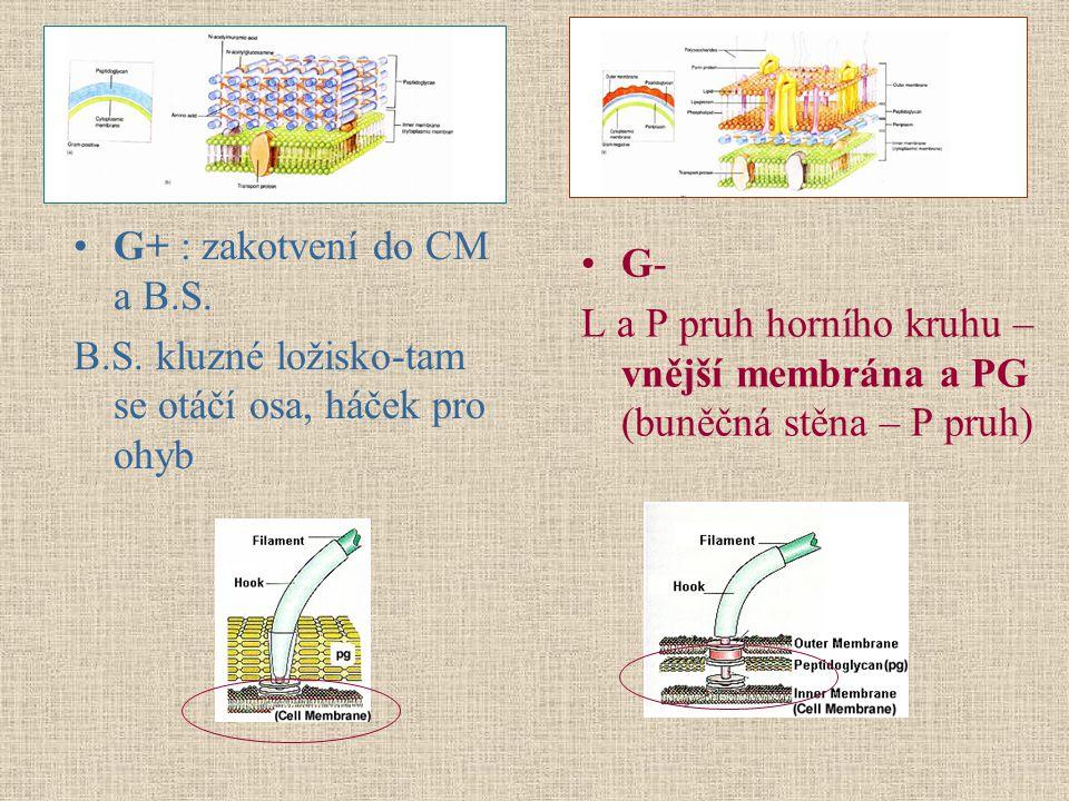 G+ : zakotvení do CM a B.S. B.S. kluzné ložisko-tam se otáčí osa, háček pro ohyb. G-