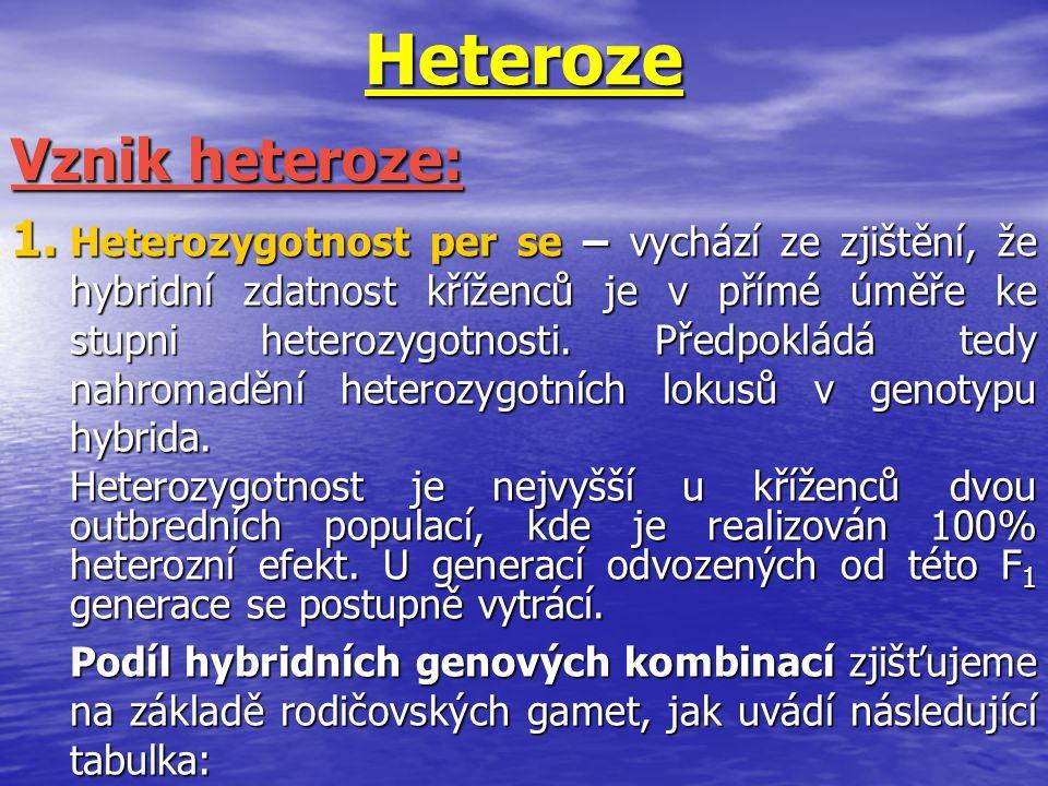Heteroze Vznik heteroze: