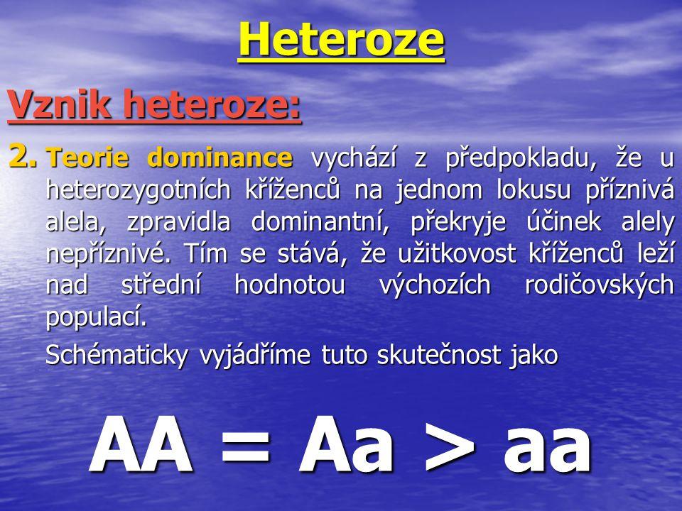 AA = Aa > aa Heteroze Vznik heteroze:
