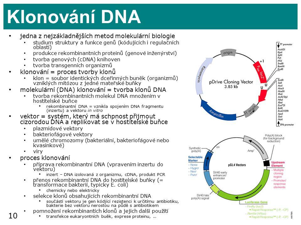 Klonování DNA jedna z nejzákladnějších metod molekulární biologie