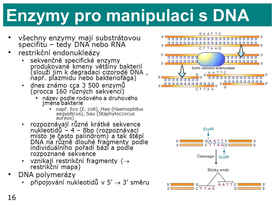 Enzymy pro manipulaci s DNA
