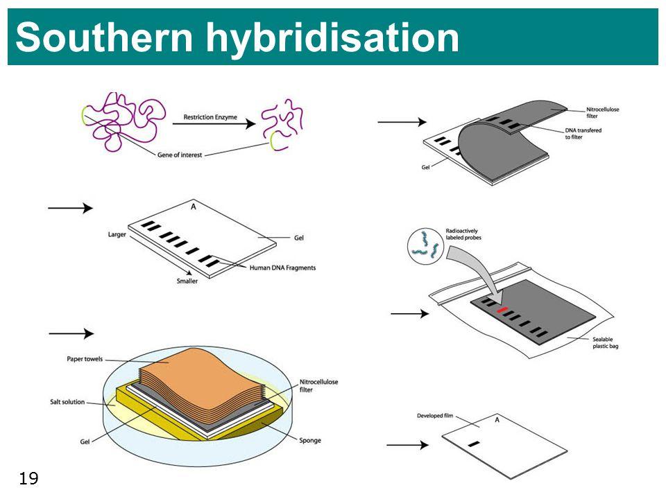 Southern hybridisation