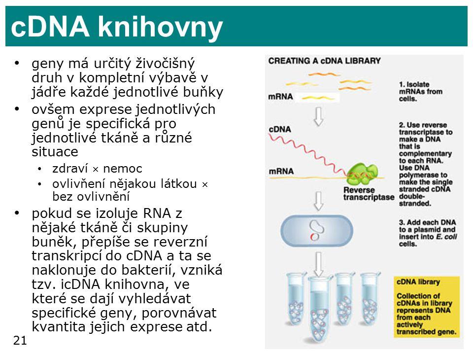 cDNA knihovny geny má určitý živočišný druh v kompletní výbavě v jádře každé jednotlivé buňky.