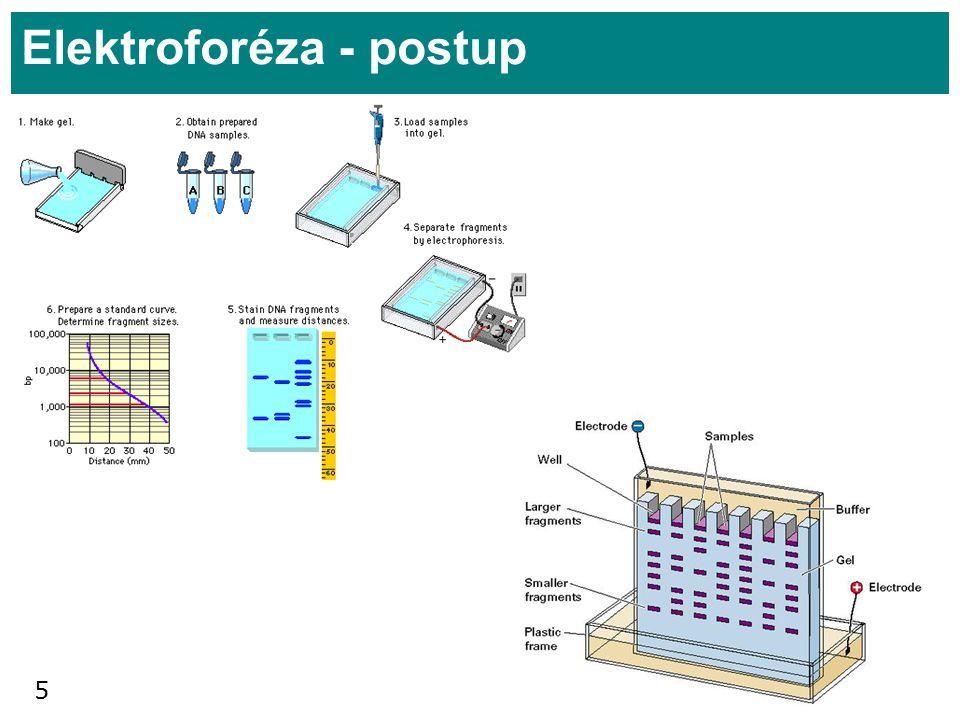 Elektroforéza - postup