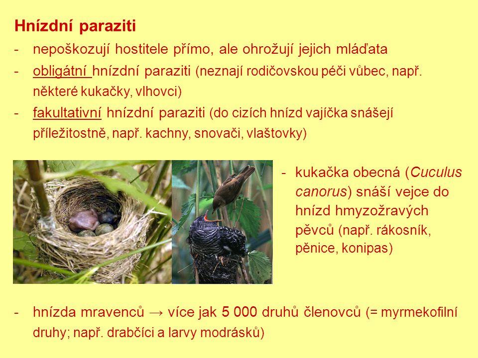 Hnízdní paraziti nepoškozují hostitele přímo, ale ohrožují jejich mláďata.
