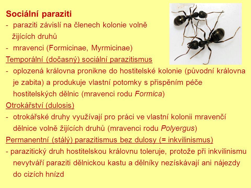 Sociální paraziti paraziti závislí na členech kolonie volně