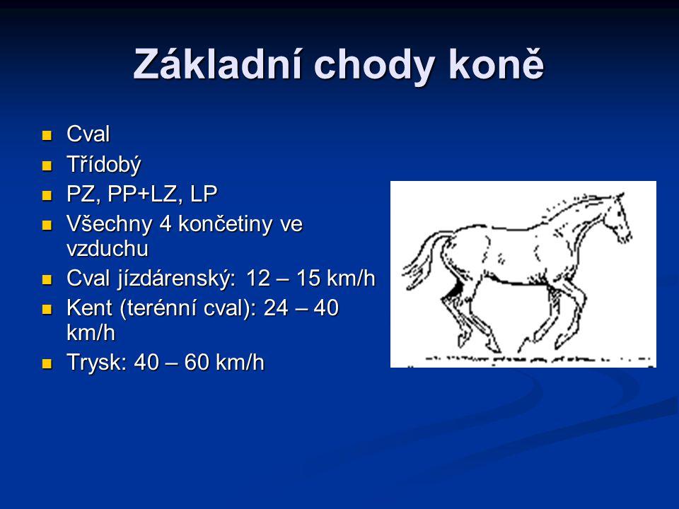 Základní chody koně Cval Třídobý PZ, PP+LZ, LP