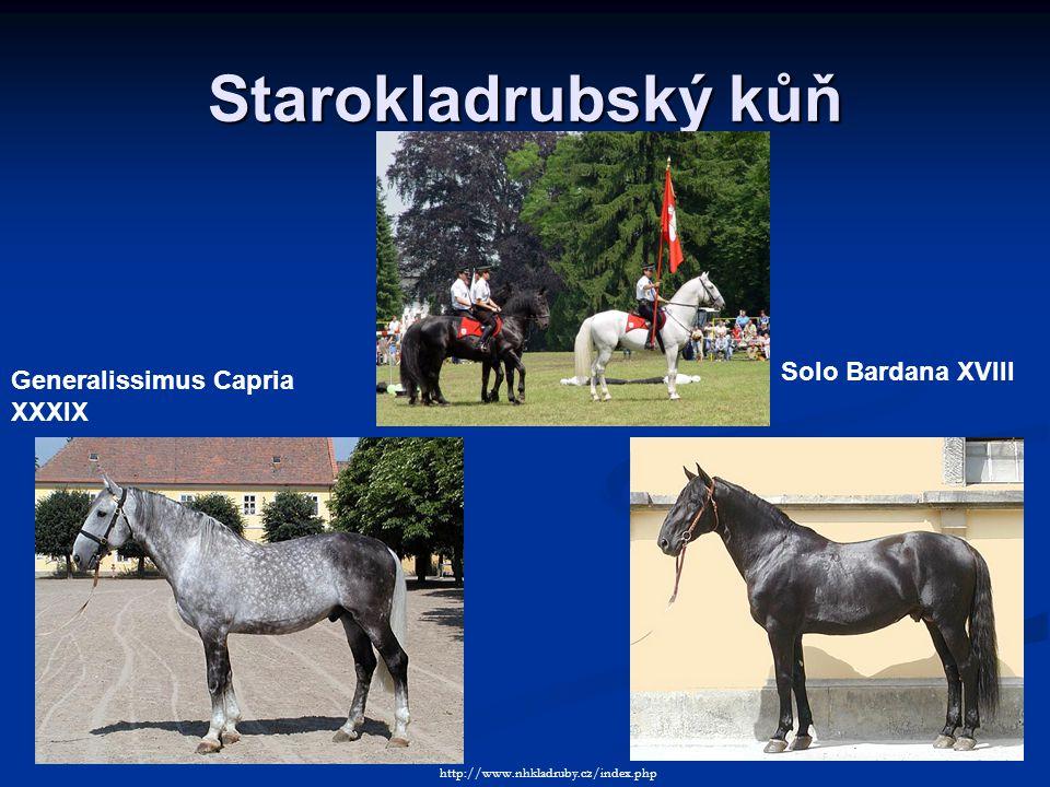 Starokladrubský kůň Solo Bardana XVIII Generalissimus Capria XXXIX