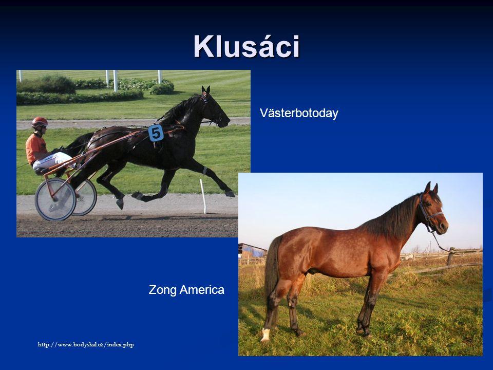 Klusáci Västerbotoday Zong America http://www.bodyskal.cz/index.php