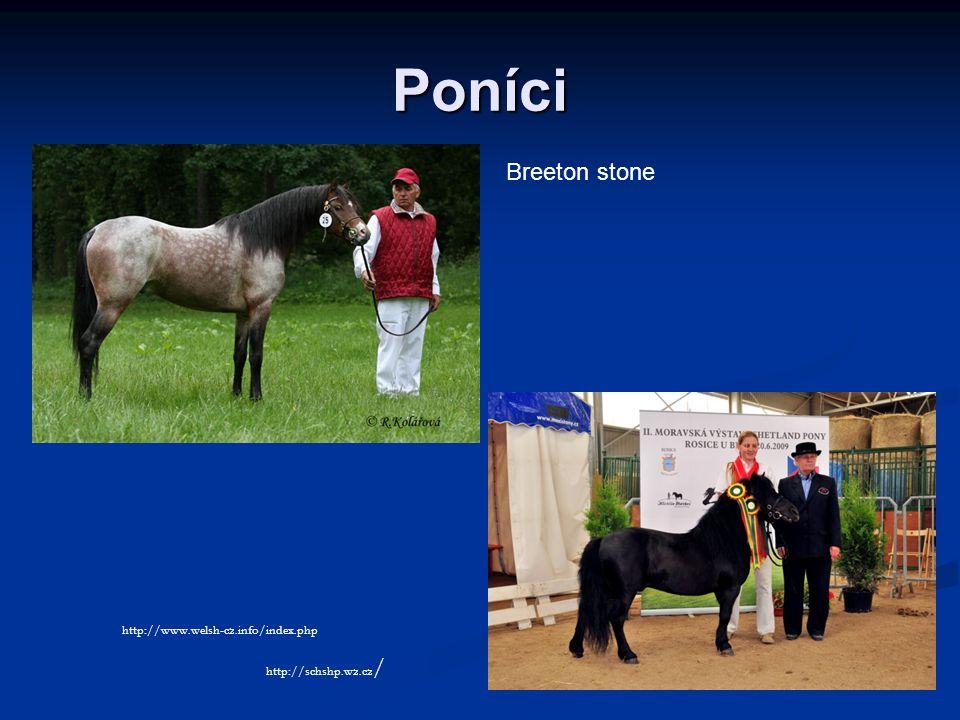 Poníci Breeton stone http://www.welsh-cz.info/index.php