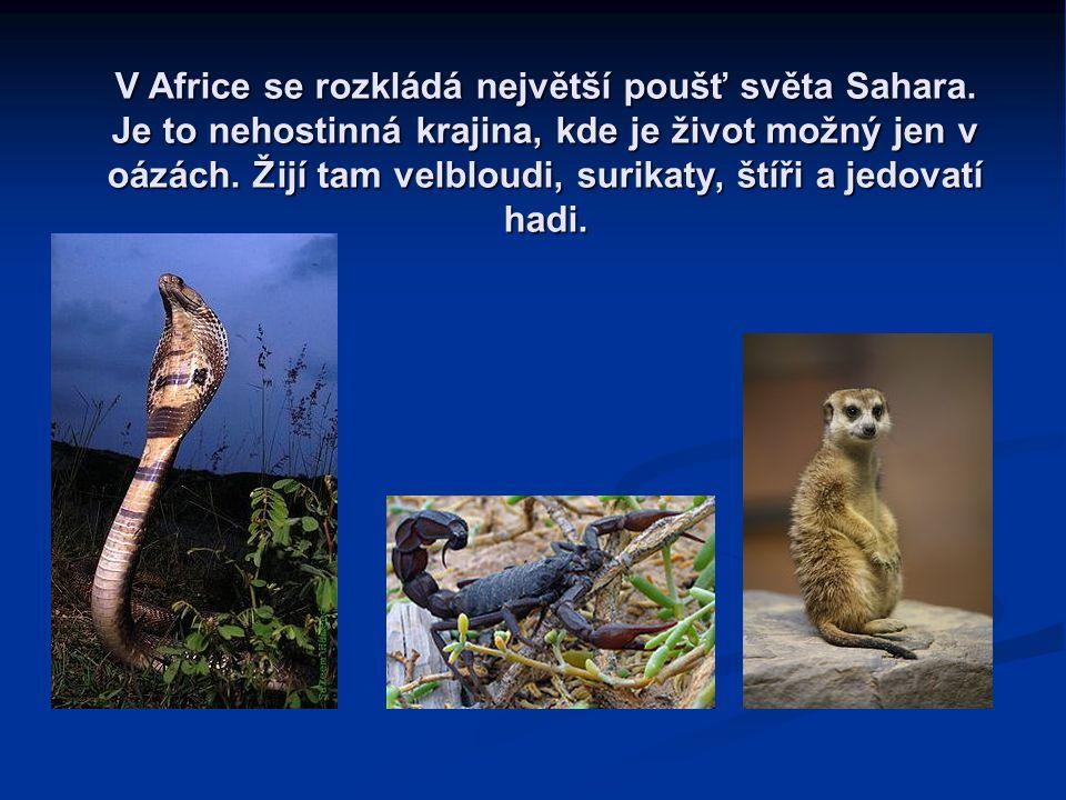 V Africe se rozkládá největší poušť světa Sahara