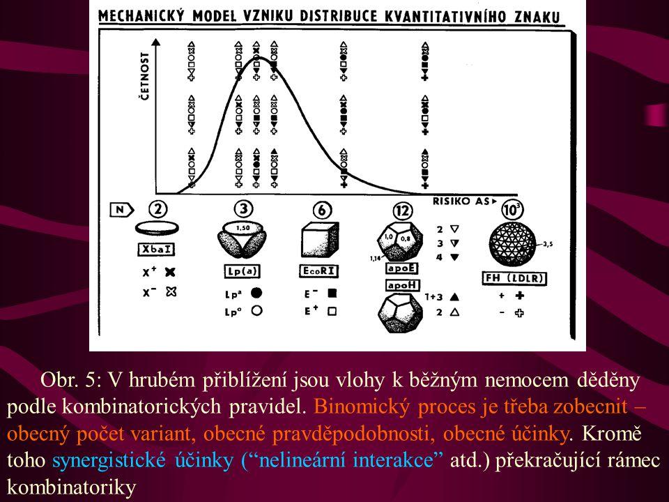 Obr. 5: V hrubém přiblížení jsou vlohy k běžným nemocem děděny podle kombinatorických pravidel.